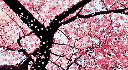 (1)强烈推荐【赏花旅拍】3月17日万亩桃花林|古镇旅拍-户外活动图-驼铃网
