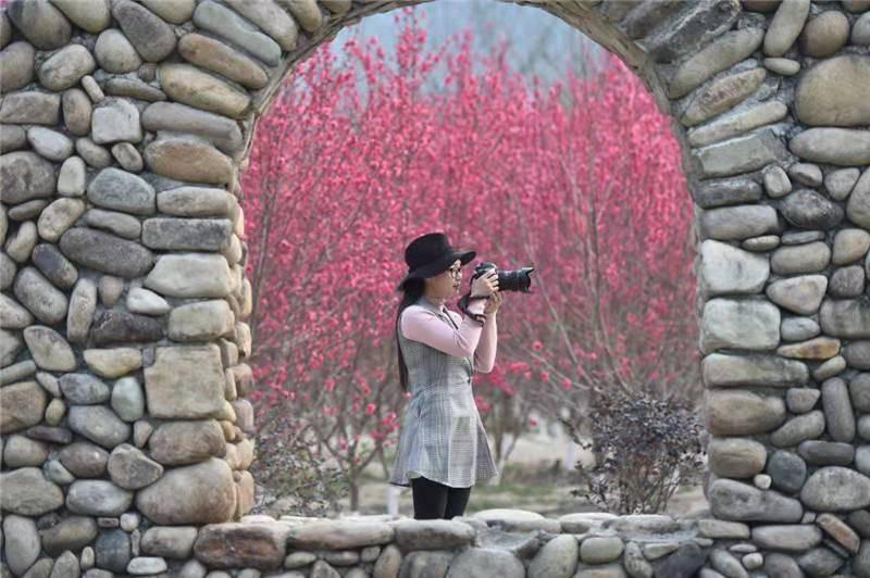 (4)强烈推荐【赏花旅拍】3月17日万亩桃花林|古镇旅拍-户外活动图-驼铃网