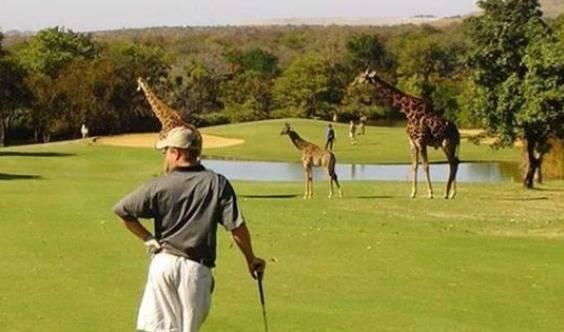 高端人脉高尔夫球赛南非13天10晚6场球