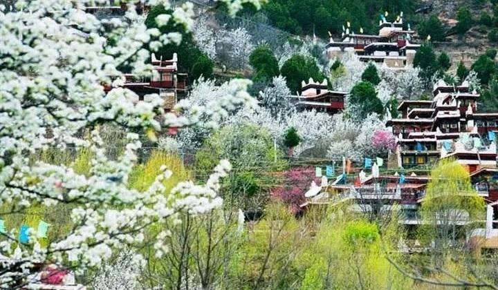 丹巴梨花丨自驾4天重庆/成都出发,漫步梨花海,回眸美人笑,揽尽丹巴藏寨美