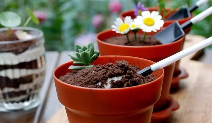 优贝思烘焙课——盆栽木糠杯